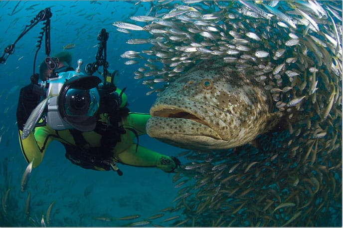 Coiba Isalnd dive
