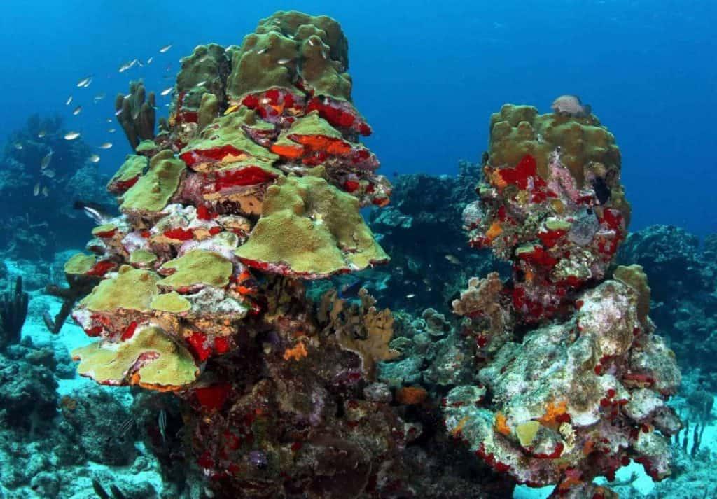 Diving Curacao courtesy of Ocean Encounters