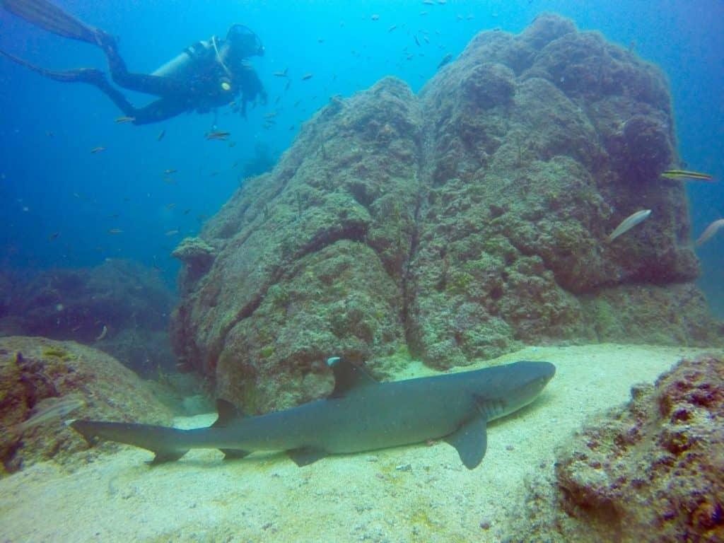 Diving at Playa El Estero and Playa Santa Catalina, Panama