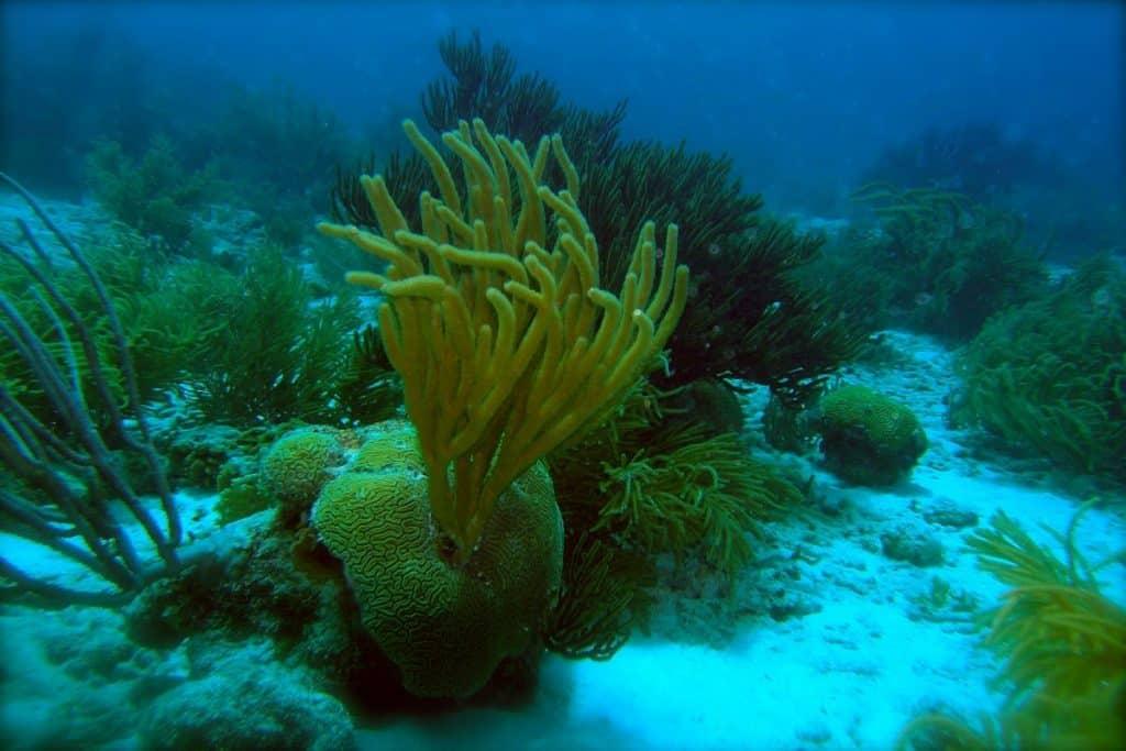 Bonaire scuba diving, courtesy of ScubaCoe