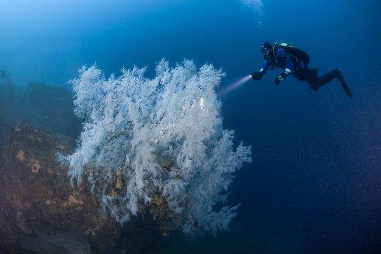 Scuba Diving Fiordland National Park in New Zealand