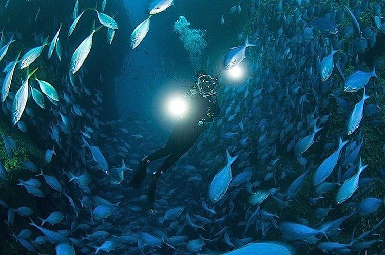 North Island - New Zealand Scuba Diving