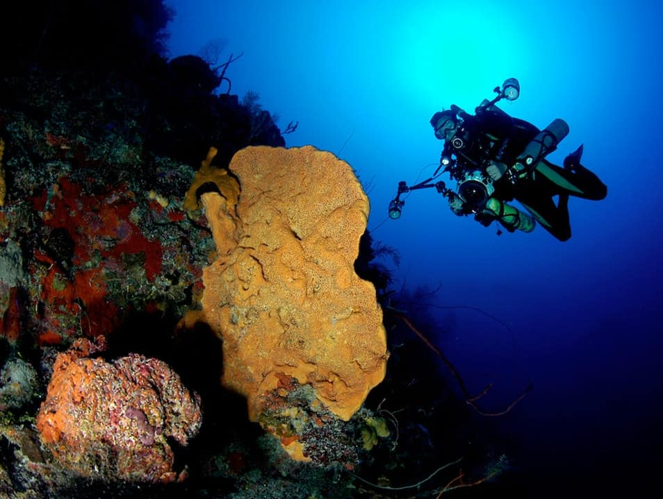 Bloody Bay Wall is considered the epicenter of scuba diving in the marine park of Little Cayman.