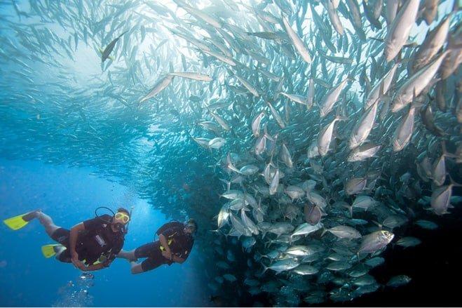 Diving Le Jardin de Corail (The Coral Garden)