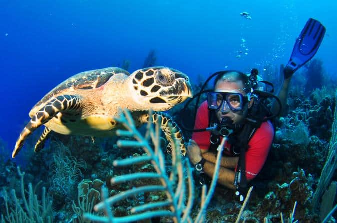 Grand Cayman has over 50 dive sites which offer all types of diving for all levels of certification.
