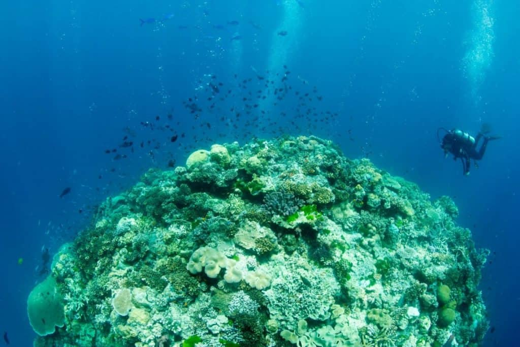 Charlies Diving Blog