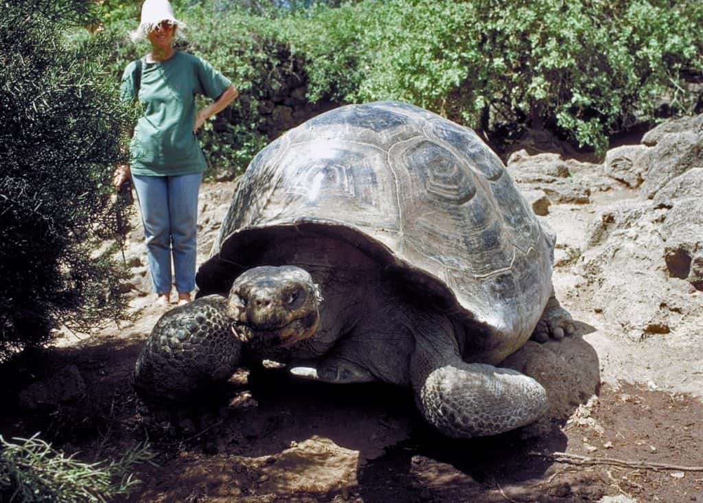 Cool Galapagos