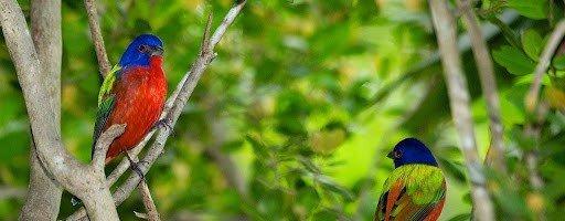 Bird watching while visiting the Bahamas