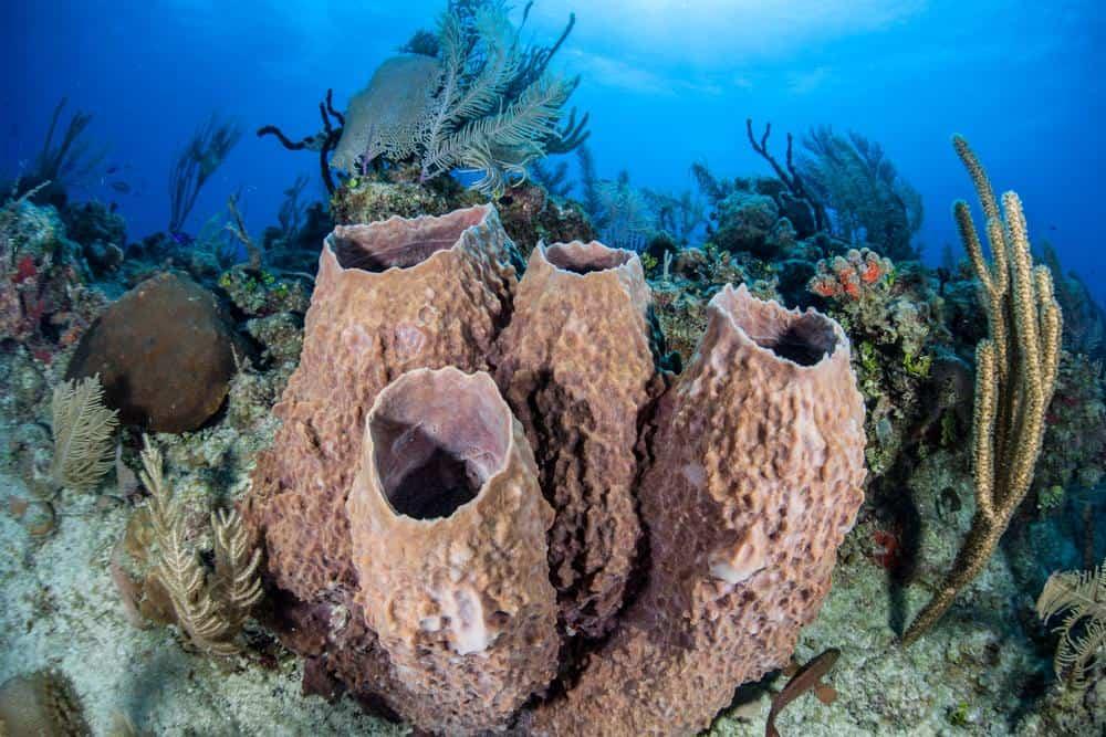 Scuba diving L'aquarium (The Aquarium) at Martinique and Guadeloupe