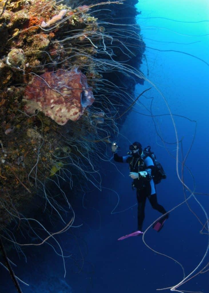 Tongue of the Ocean diving at Bahamas