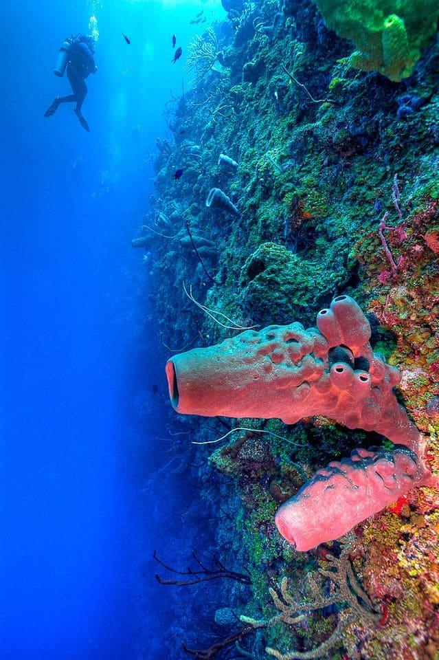 Diving Joy's Joy Wall dive in Little Cayman