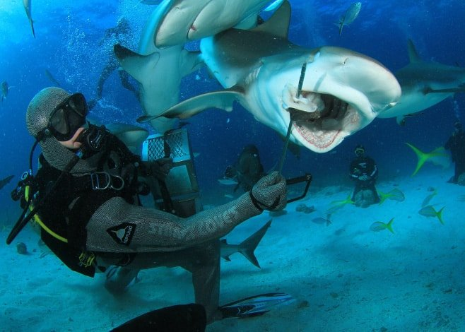 Scuba diving Bahamas is known for its shark feeding experiences