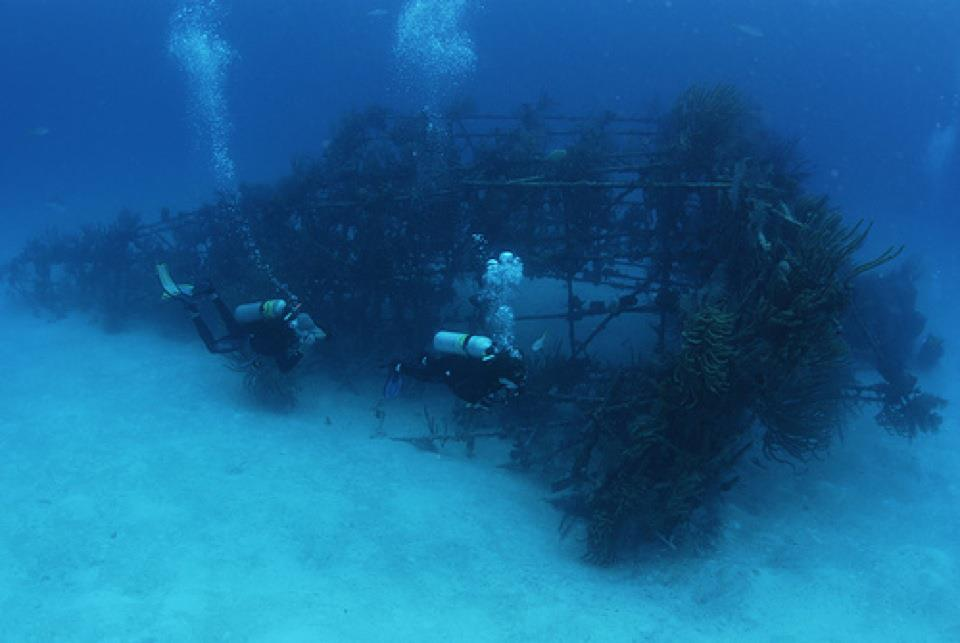 Vulcan Bomber Wreck in Bahamas