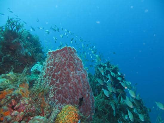 Diving the Anse Dufour Reef in Martinique and Guadeloupe