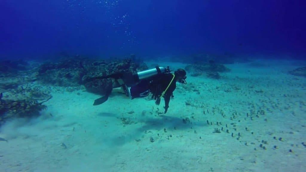 Bimini diving at Bahamas