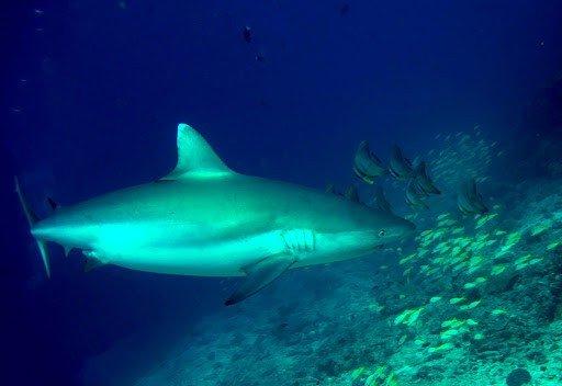 lite Diving Agency