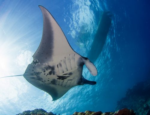 Divers Down UAE2